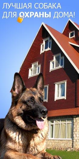 Немецкая Овчарка — лучшая собака для охраны дома